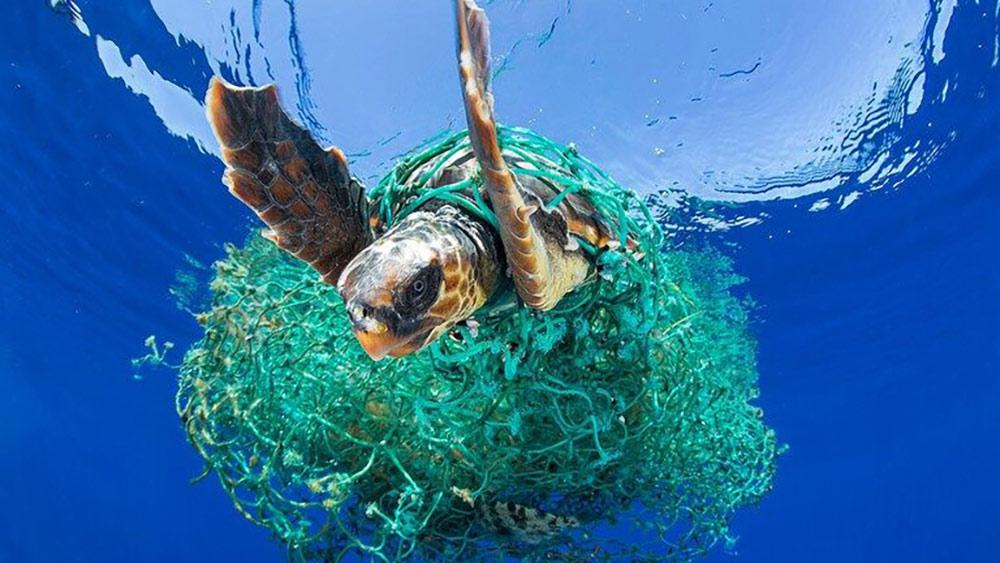 Help Keep Our Oceans Clean