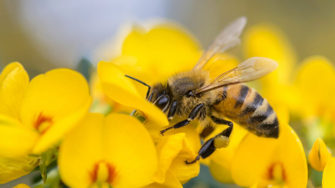 Protecting Honeybees and Other Species from Toxic Pesticides
